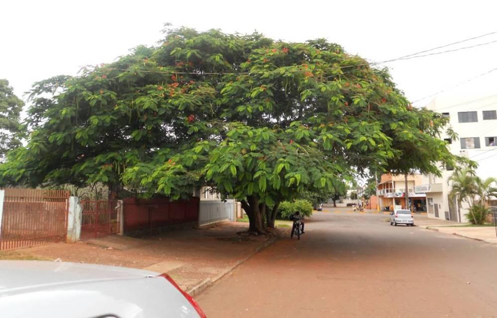 Jonni's Grace Tree